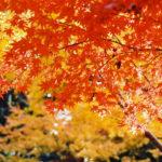 家族ででかけたい秋冬のおすすめスポット